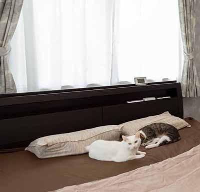 ペットと暮らす心地いい二世帯住宅